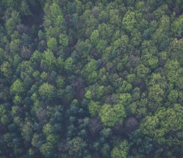 Door de algoritme-bomen toch nog het analytics-bos zien